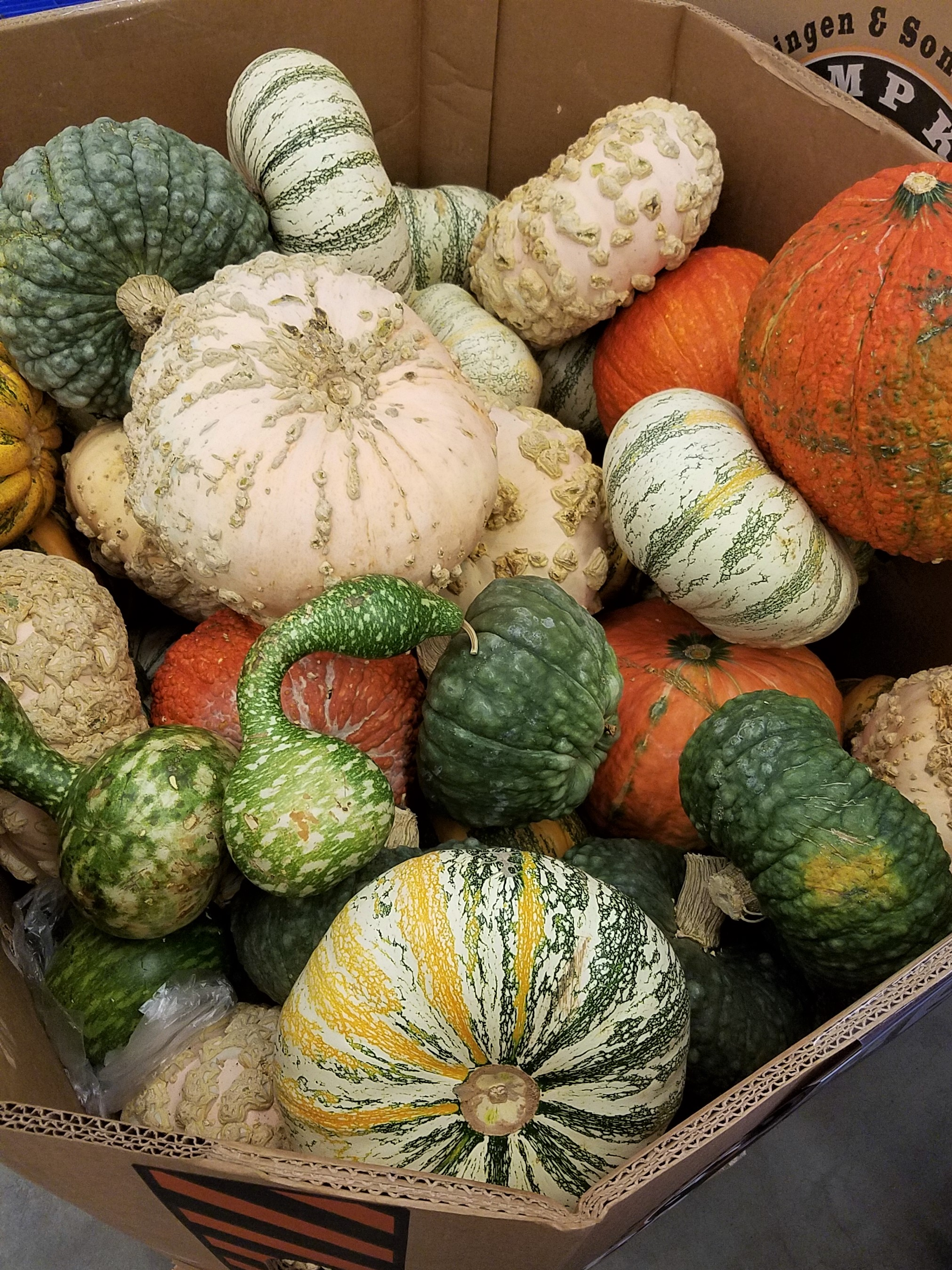 Delicious Seasonal produce